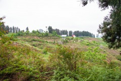 Sakhalvasho's Umgebung