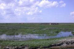 Landschaft am Tataru-Kanal