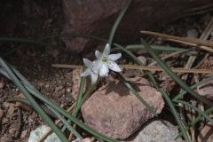 Unbekannte Pflanze