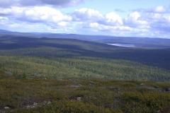Blick über die Weite der finnischen Wälder