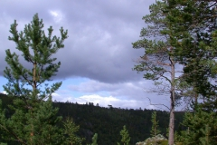 Landschaft im Kevo Naturreservat
