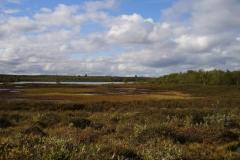 Landschaft im Kevo Naturreservat by Seija