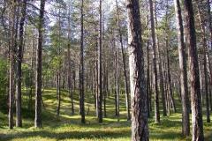 Landschaft am Lemmenjoki