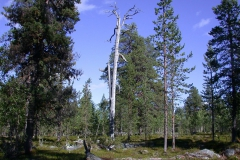 Landschaft um Sallivaara