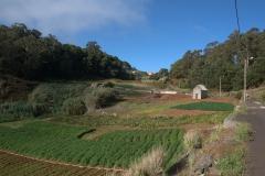 Felder entlang des Wanderweges