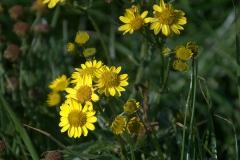Unbekannte Blumen