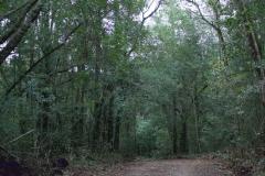 Landschaft im Tsitsikamma National Park