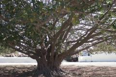Unbekannter Baum
