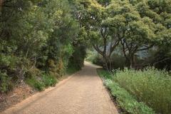 Im Kirstenbosch Botanischer Garten