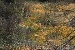 Skilpad Reserve im Namaqua National Park
