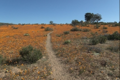 Skilpad Nature Reserve im Namaqua National Park