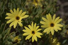 Unbekannte Blüten