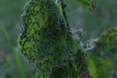 Unbekannte Insekten