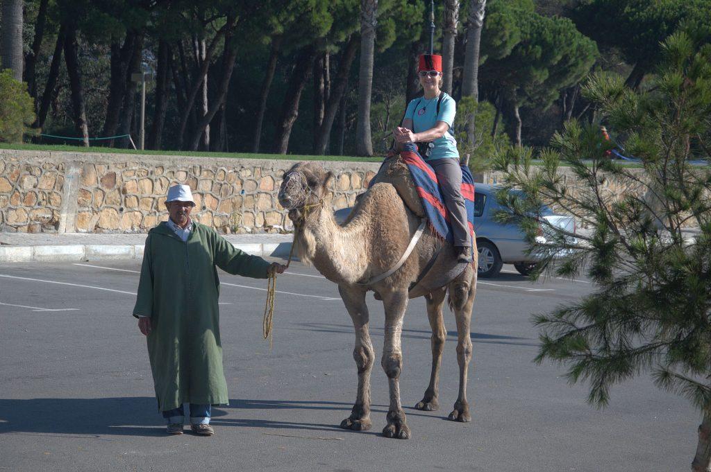 Petra auf dem Kamel