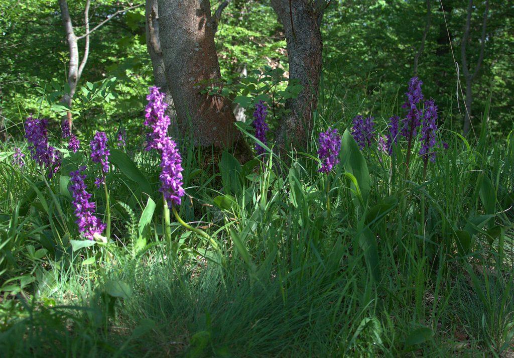 Unbekannte Orchideen