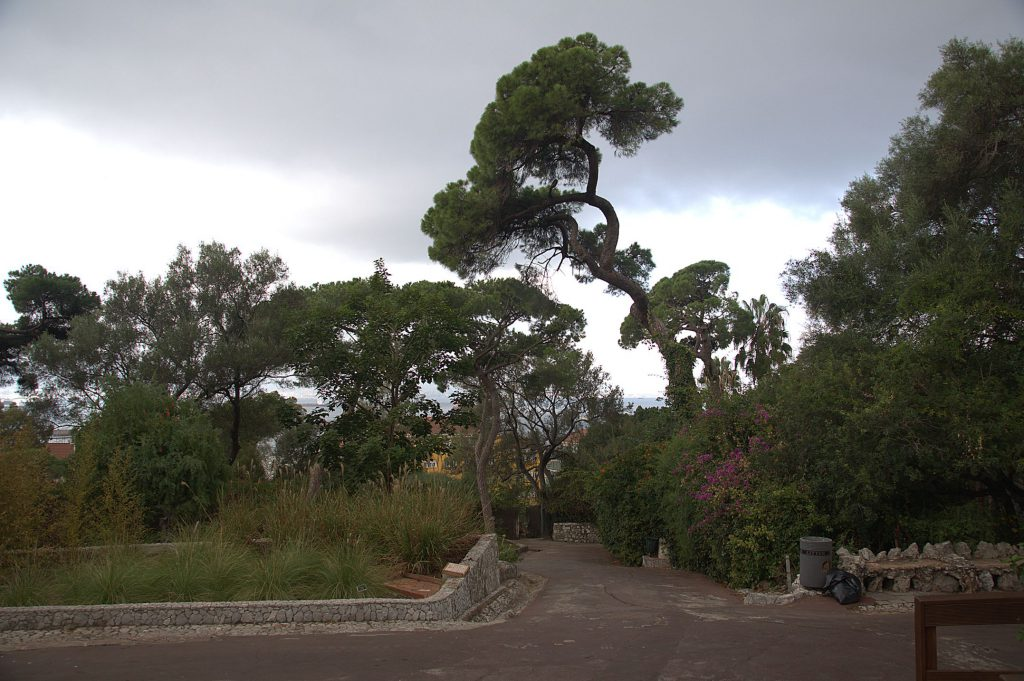 DSC_1522 -1_Gibraltar Botanischer Garten