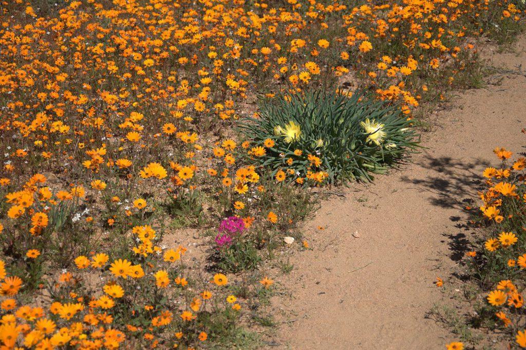 Blütenpracht am Wanderpfad
